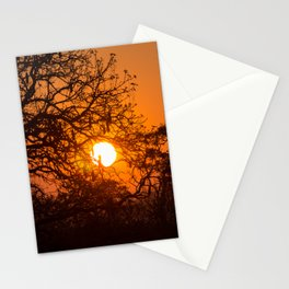 Sultry sun setting behind the sausage tree Stationery Cards
