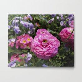 Spring Rosy Ranunculus And Primrose With Violet Violas Metal Print