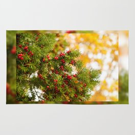 Yew red fruits bunch grow Rug
