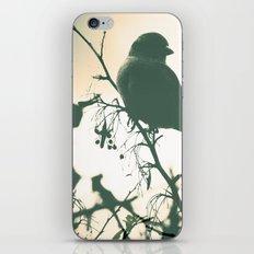 Alight iPhone & iPod Skin