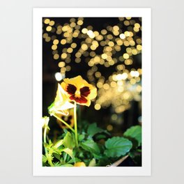 Flower of the Night Art Print