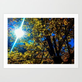 Sunlit Leaves Art Print