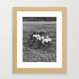Grazing Elk Framed Art Print