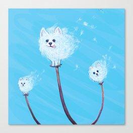 Pomeranian Dandelions Canvas Print