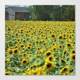 A landscape of beautiful sunflowers by Jéanpaul Ferro Canvas Print