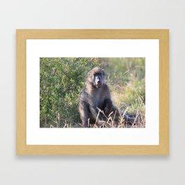 """Hey, whassup,"" said the Baboon Framed Art Print"