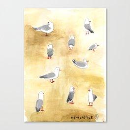 Seagulls of Newcastle Canvas Print