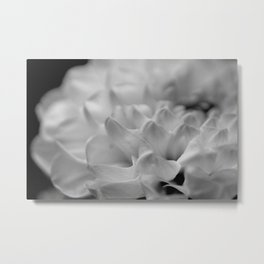 flower close up - black/white - seven Metal Print