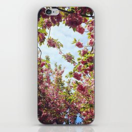 Cherry Blossom Delight 2 iPhone Skin