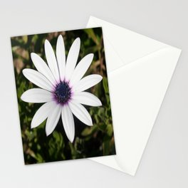 White African Daisy Stationery Cards