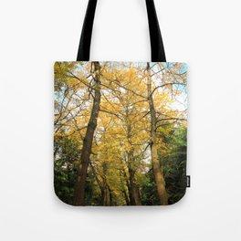 Ginkgo biloba trees Tote Bag