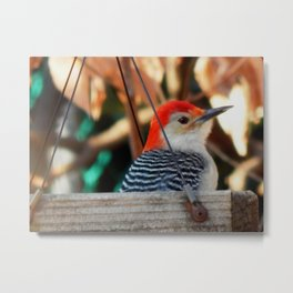 Woodpecker feeder Metal Print