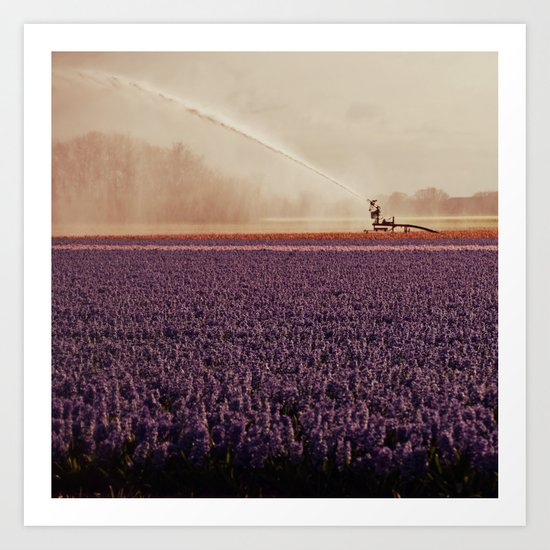 Hyacinth field #3 Art Print
