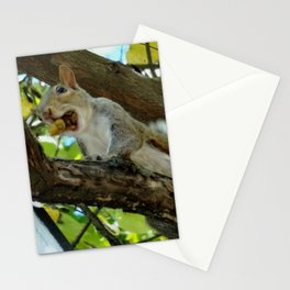Mouthful squirrel Stationery Cards