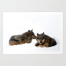 Wolves In the Snow Art Print