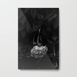 Peony after the rain - Black and White III Metal Print