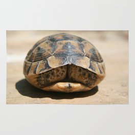 Land Turtle Hiding In Its Shell  Rug