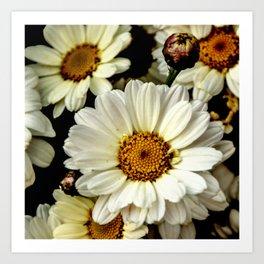 chamomile flower Art Print