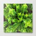 Green plant by jsebouvi