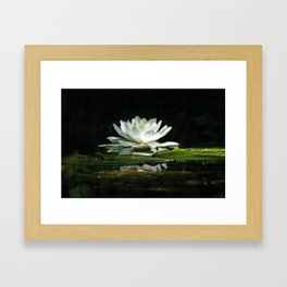 One lonely lily pad bloom in the channel Framed Art Print