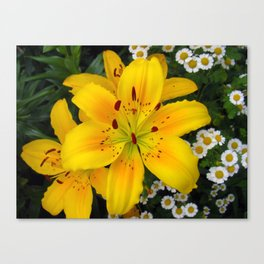 Smiling Golden Lily Canvas Print
