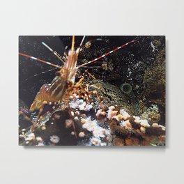 Little Shrimp Metal Print