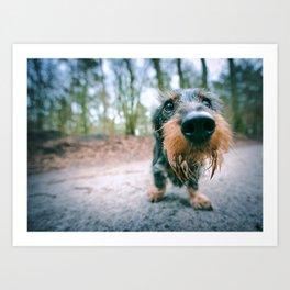 DACKEL DOG #39 Art Print