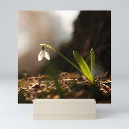 Light In Shade. Snowdrop Flower Bathing In Sun #decor #society6 Mini Art Print