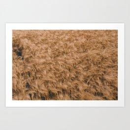 Vintage Field 04 Art Print
