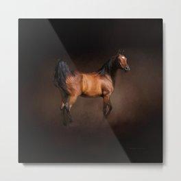 Arabian Bay Horse Metal Print