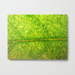 Macro Leaf No 4 Metal Print