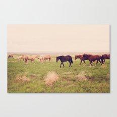 Badlands Horses, South Dakota Canvas Print
