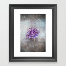 Beautiful Lilac Hydrangea Framed Art Print