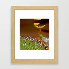 Leaf of rose in rain and evening sun Framed Art Print