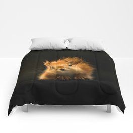 Starring Squirrel Comforters