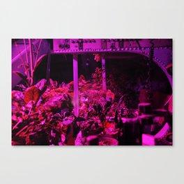 Wasteland Canvas Print