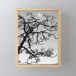 Tree Silhouette Framed Mini Art Print