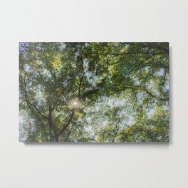 Inside the tree Metal Print