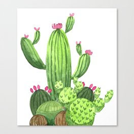 Green Cacti with Pink Flowers Canvas Print