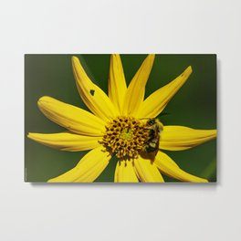 The Bumble and The Sunflower #2 Metal Print
