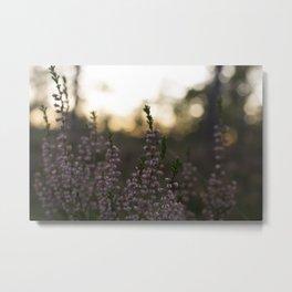 Calluna Metal Print