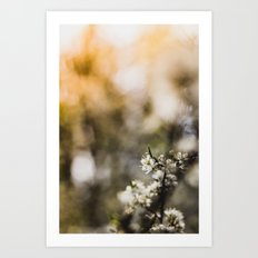 Blooming, Blossom, Sunflare - Spring in my Hearth! Art Print
