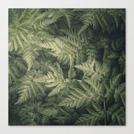 SHADED GREEN FERN Canvas Print