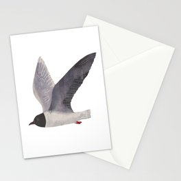 little gull Stationery Cards