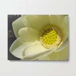 Extraordinary Lotus Metal Print