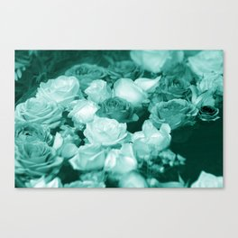 Teal Roses Canvas Print