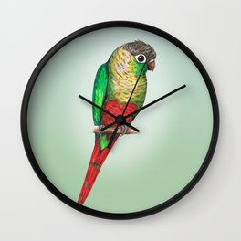 Conure with a heart on its belly Wall Clock