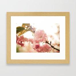 Spring Blossoms (2) Framed Art Print
