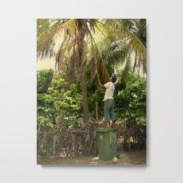 Getting Coconuts Metal Print