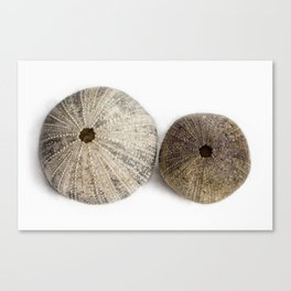 Sea Urchin Shells Canvas Print